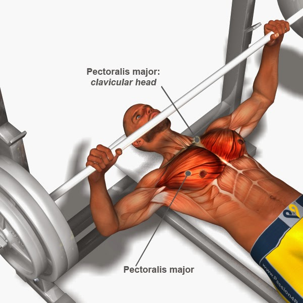 Chest-Exercises ; Chest Workouts
