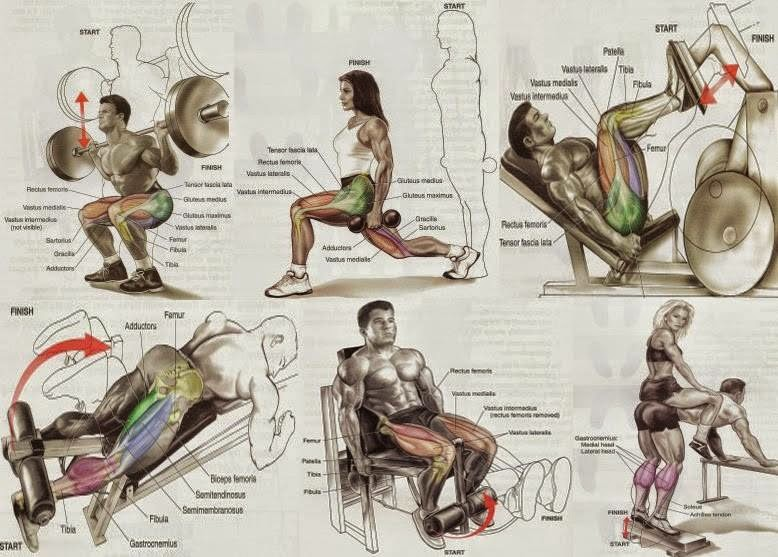Exercises For The Legs