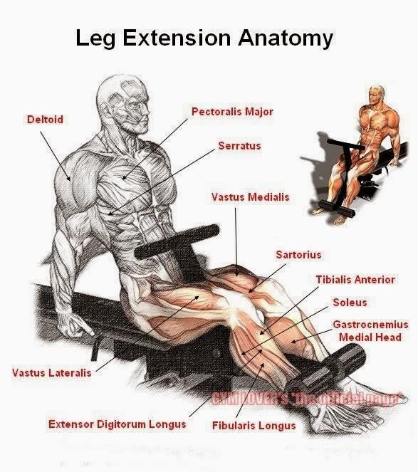 The Squatless Leg Workout