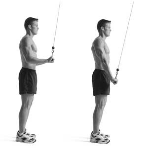 Lying Triceps Extention :