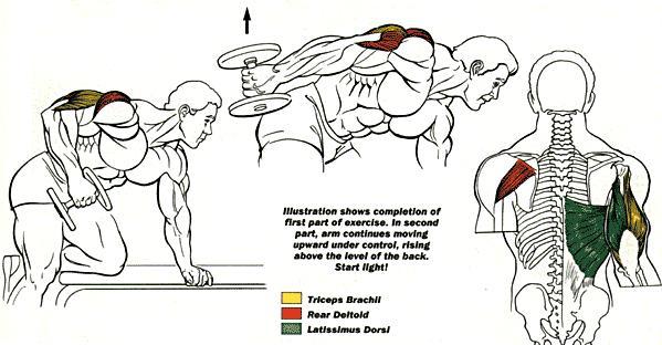 Triceps Dumbbell Kickback