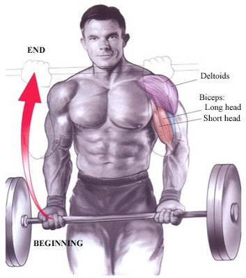 Biceps – Standing Barbell Curl