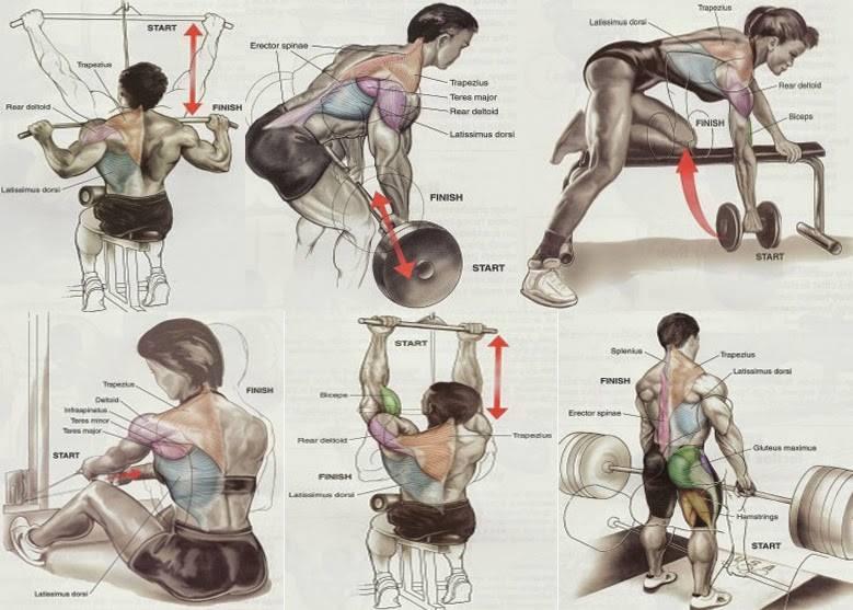 back workout chart