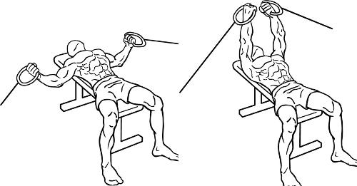 Chest Exercises