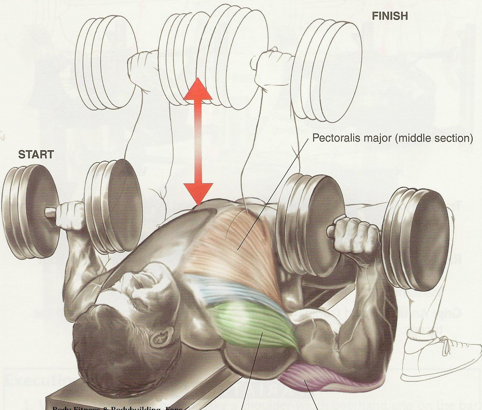 Bodybuilding Mass Training