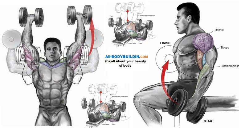 Upper Body Dumbbell Exercises