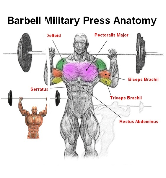 Standing/Seated Barbell Press