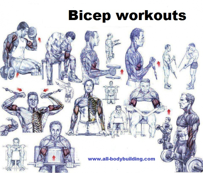 Bicep Workouts For Mass