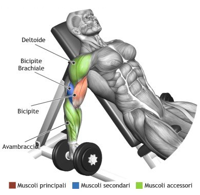 Seated Alternate Dumbbell Curl
