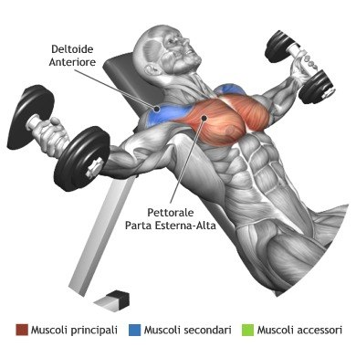 Dumbbell Incline Fly's