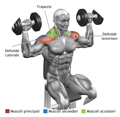 Standing/Seated Dumbbell Press