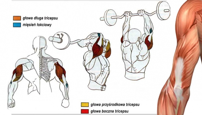 Bodybuilding Workouts