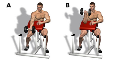 Hammer Strength Curls