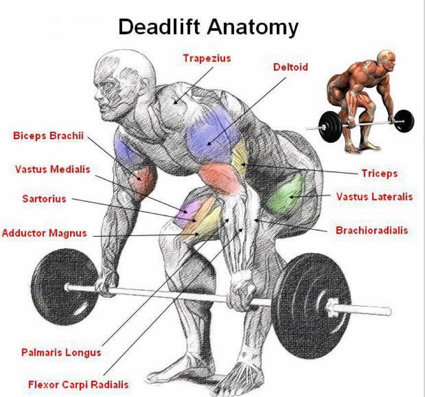 Squat and Deadlift