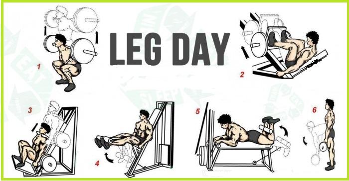 Lower Body Exercises