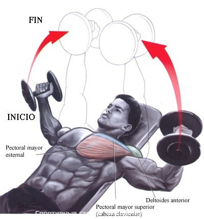 Incline  Chest Flys