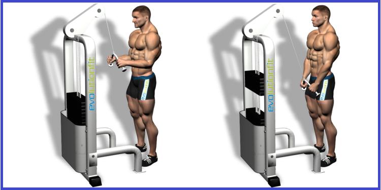 Triceps Push-downs