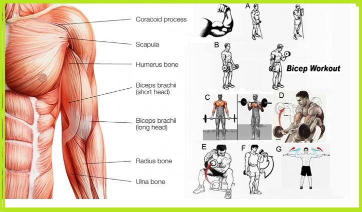 Bicep Workout - Killer Bicep Workout