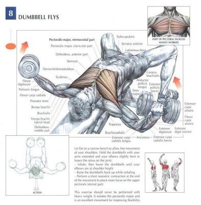 basic bodybuilding exercise