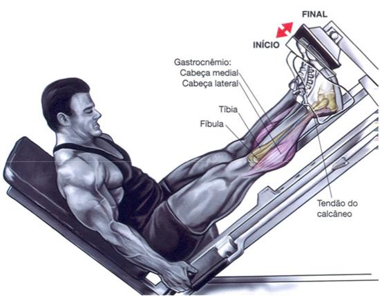 Leg Machine Calf Press