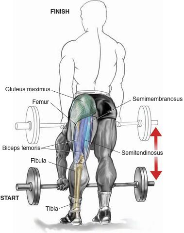 Straight Leg Dead lifts