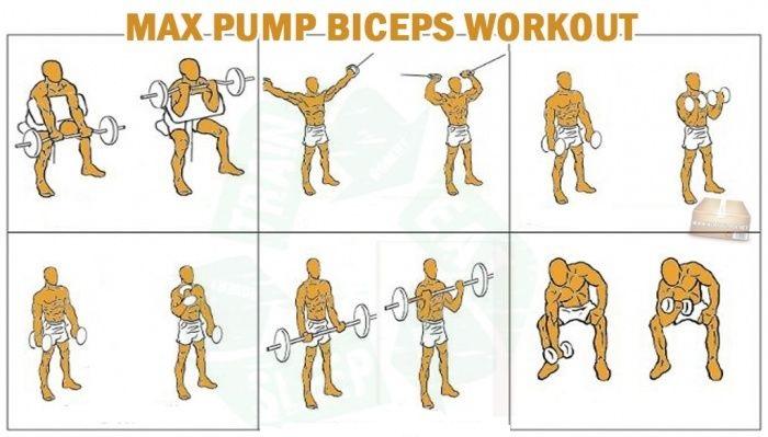 Bicep Training