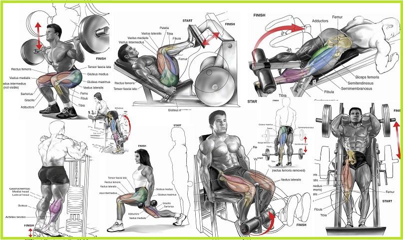 The Top  Leg Exercises