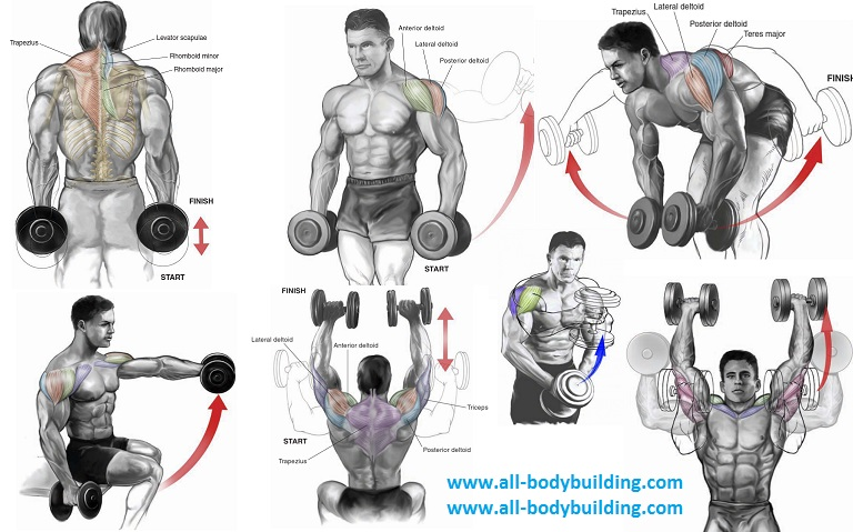 Dumbbell Exercises for Shoulders