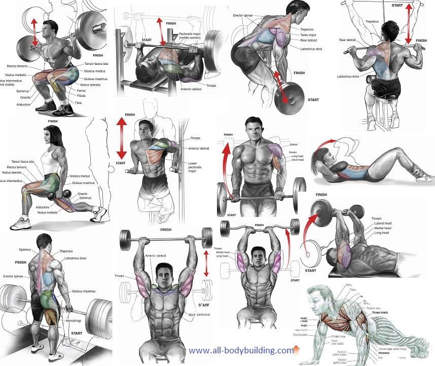 Muscle Building Routine