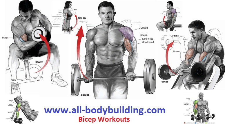 Workouts For Bicep Muscle