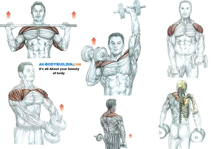 Shoulder Muscle Exercises