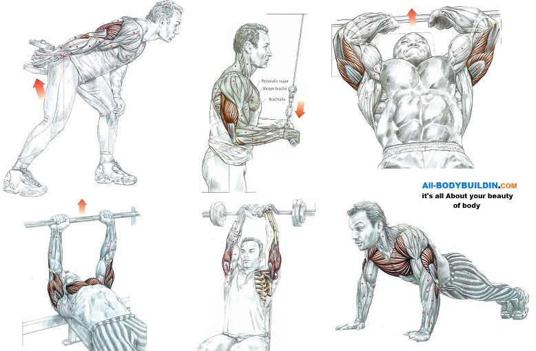 Great Exercises For Triceps