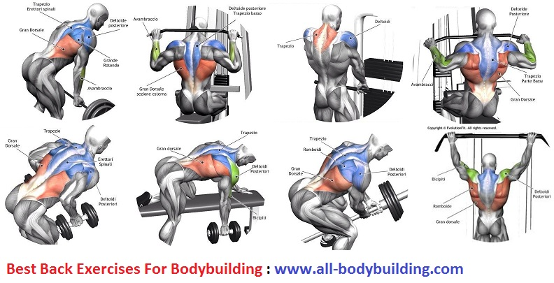 Back Exercises For Bodybuilding