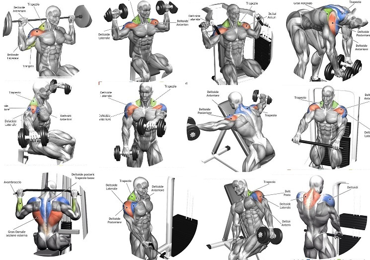 Best Shoulder Building Exercises
