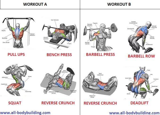 Muscle Building Workout Routine