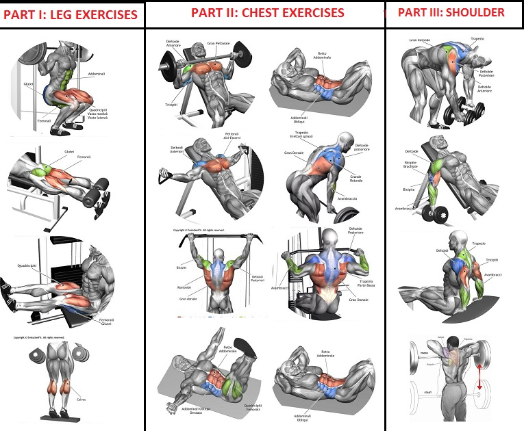 Workout Program For Quick Muscle Building