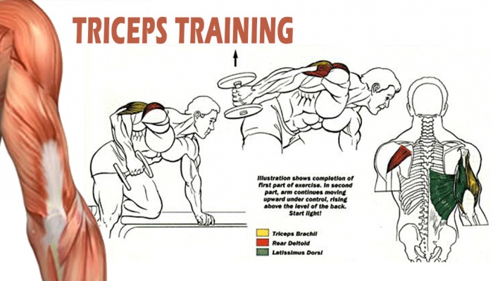 Tricep Exercises for Mas