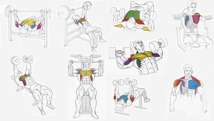 Best Chest Exercises to Build Mass