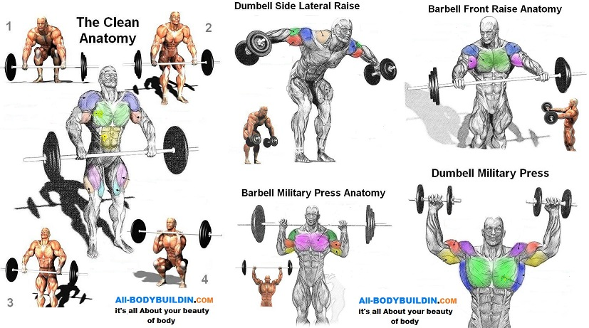Best Exercises For Shoulder