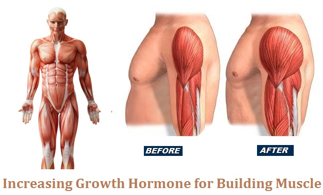 Growth Hormone for Building Muscle