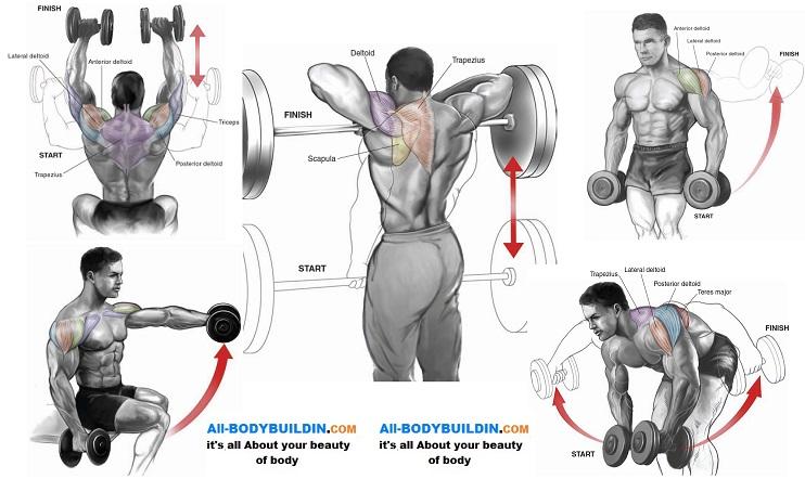 Shoulder Workouts For Mass