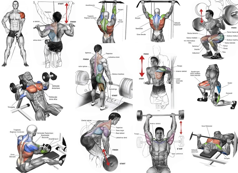 Most Effective Muscle Building Exercises