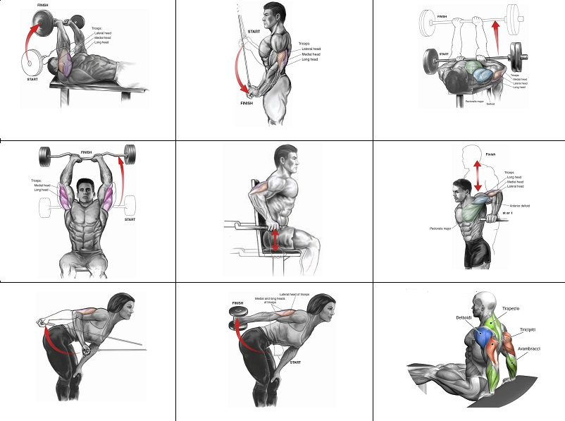Tricep Muscle Exercise Routine
