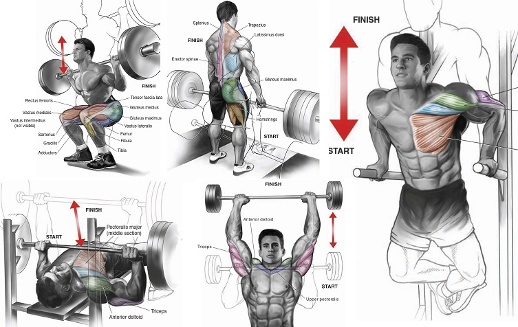 Exercises to Build Muscle Mass Fast