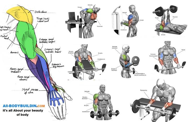 Arm Exercises,