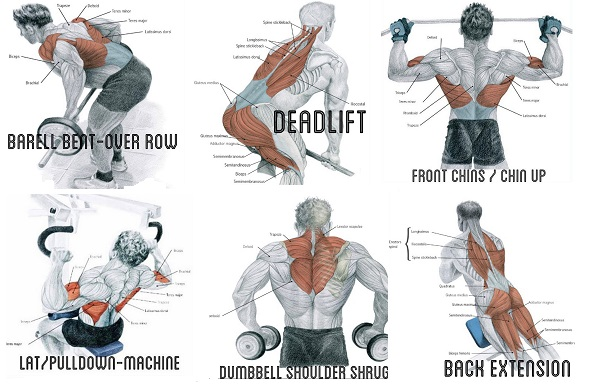 Exercise to Build Big Back Muscles