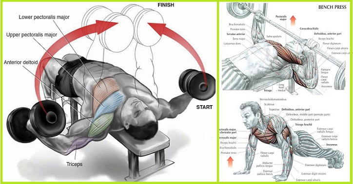 Exercises to Build Chest Muscles