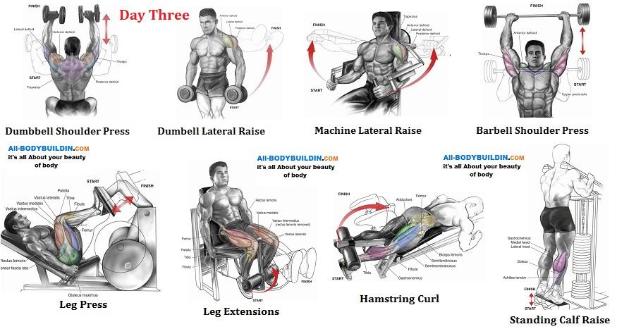 Legs & Shoulders
