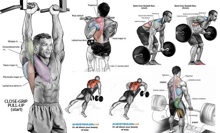 Best Upper Back Workout