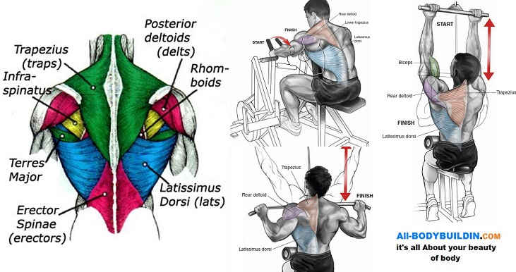 Ways to Get a Bigger and Stronger Back